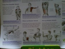 anatomical stretching chart